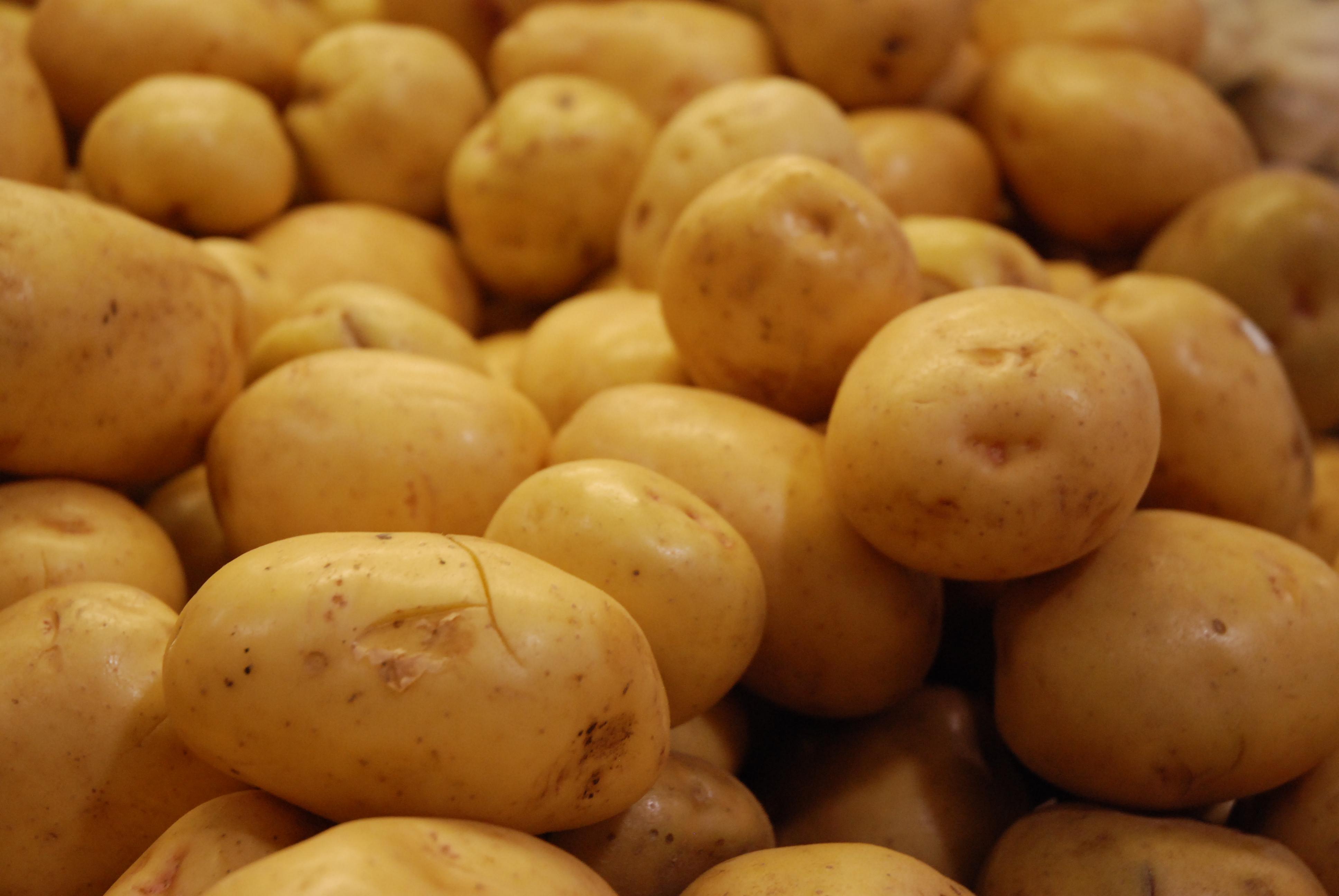 creamy mashed potato recipe, creamy mashed potatoes recipe, recipe for creamy mashed potatoes, creamy mash potato recipe, creamy mash potatoes recipe, creamy mashed potatoes recipe with cream cheese, mashed potatoes recipe, mashed potato recipe, mash potatoes recipe, mash potato recipe, best mashed potatoes recipe, recipe for mashed potatoes, mashed potato recipes, homemade mashed potatoes recipe