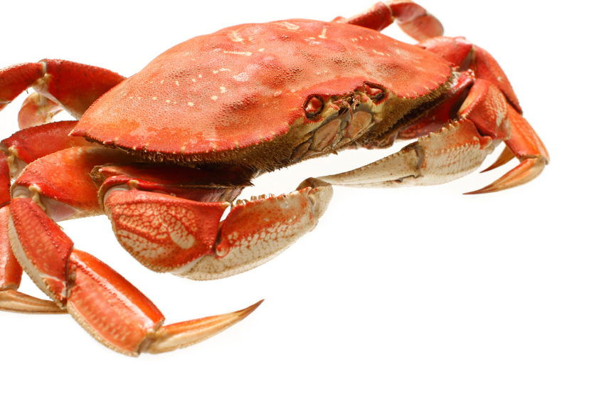 If they are in season, use my favorite Dungeness crab!
