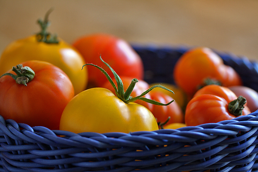 Heirloom tomatoes in Blue Basket